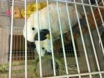 Продам какаду альба белохохлого... в городе Алматы